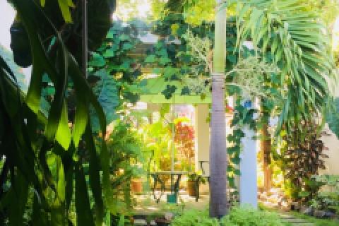 Jardin_del_Hostal_PLaza_en_la_ciudad_de_Cienfuegos_en_Cuba